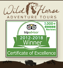 Wild Horse Adventure Tours of Corolla